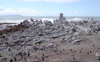 Penguins of Stony Point<br>approximately 2 hours<br>
