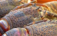 Crayfish on the Beach